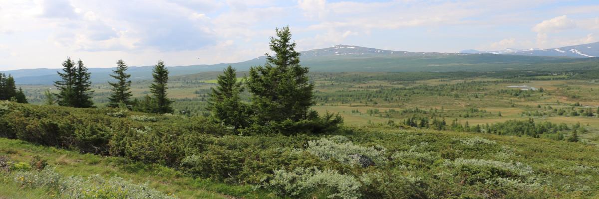 fjellandskap med et par trær og buskas