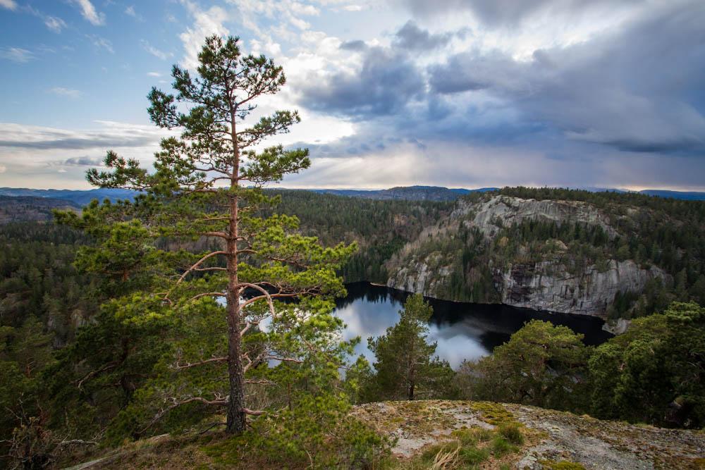 Et furutre på en kolle hvor en ser ut over et landskap med flere koller og en innsjø.