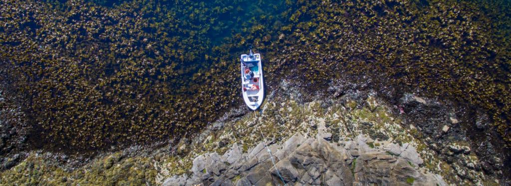 Fra Træna. Dronebilde av holmed med båt og masse tang og tare. Hentet fra nettstedet til The Northern Company.